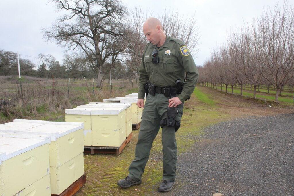 Rowdy Freeman next to bee hive boxes
