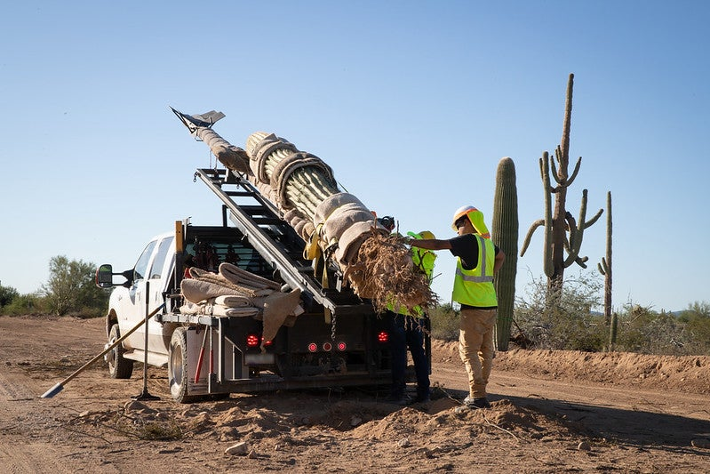 Trump border wall workers in Arizona loading saguaro cacti onto a truck