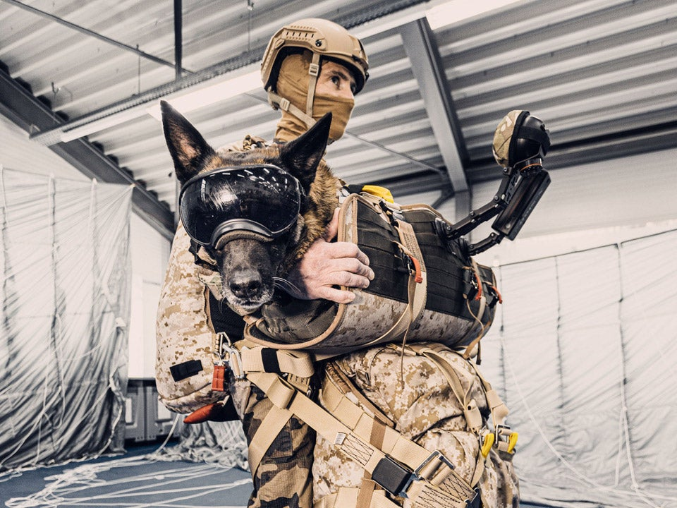 A dog in a Paratec dog parachuting harness.