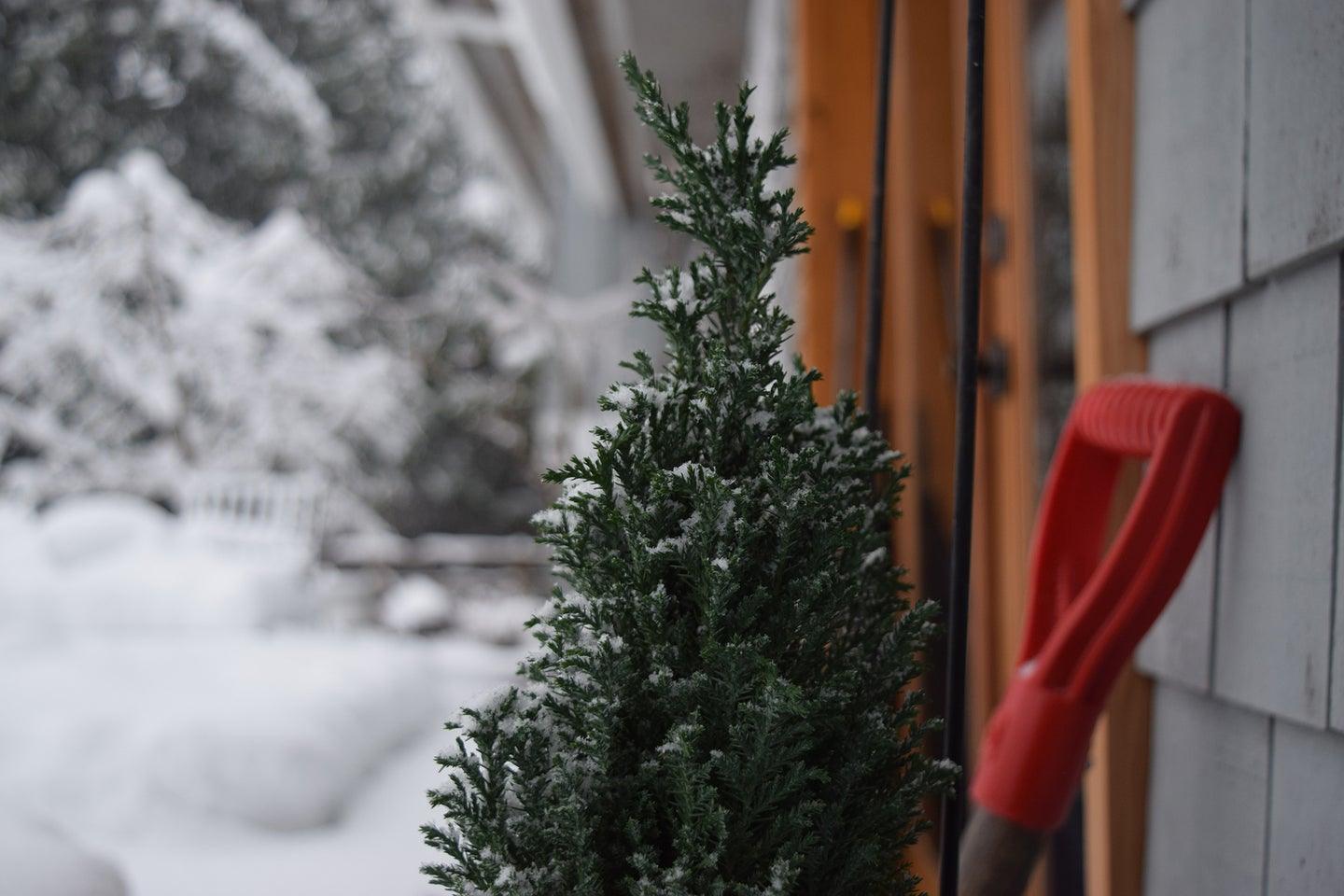 snow shovel and tree against a house with snow in the background