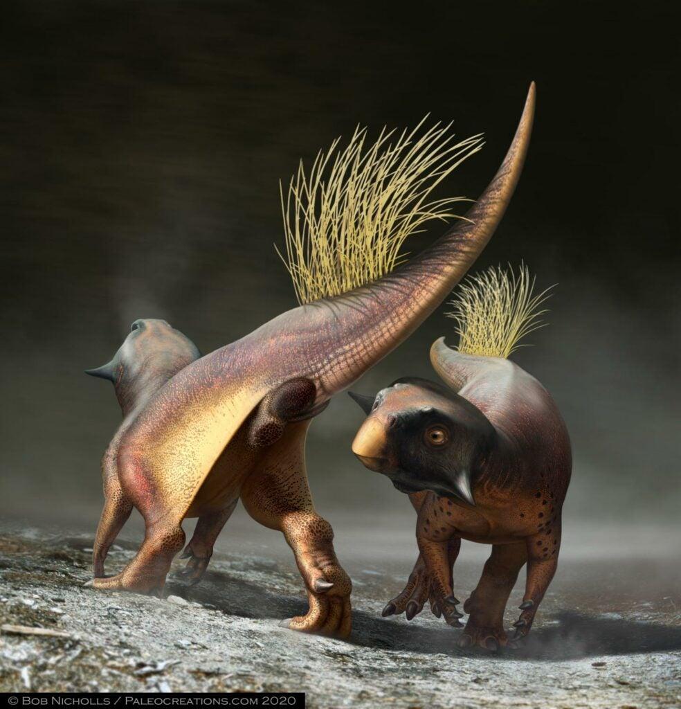 Psittacosaurus reconstruction