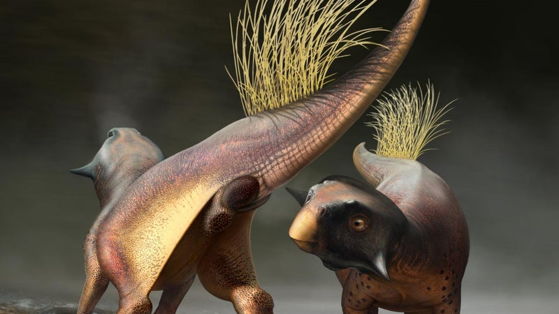 This fossilized butthole gives us a rare window into dinosaur sex
