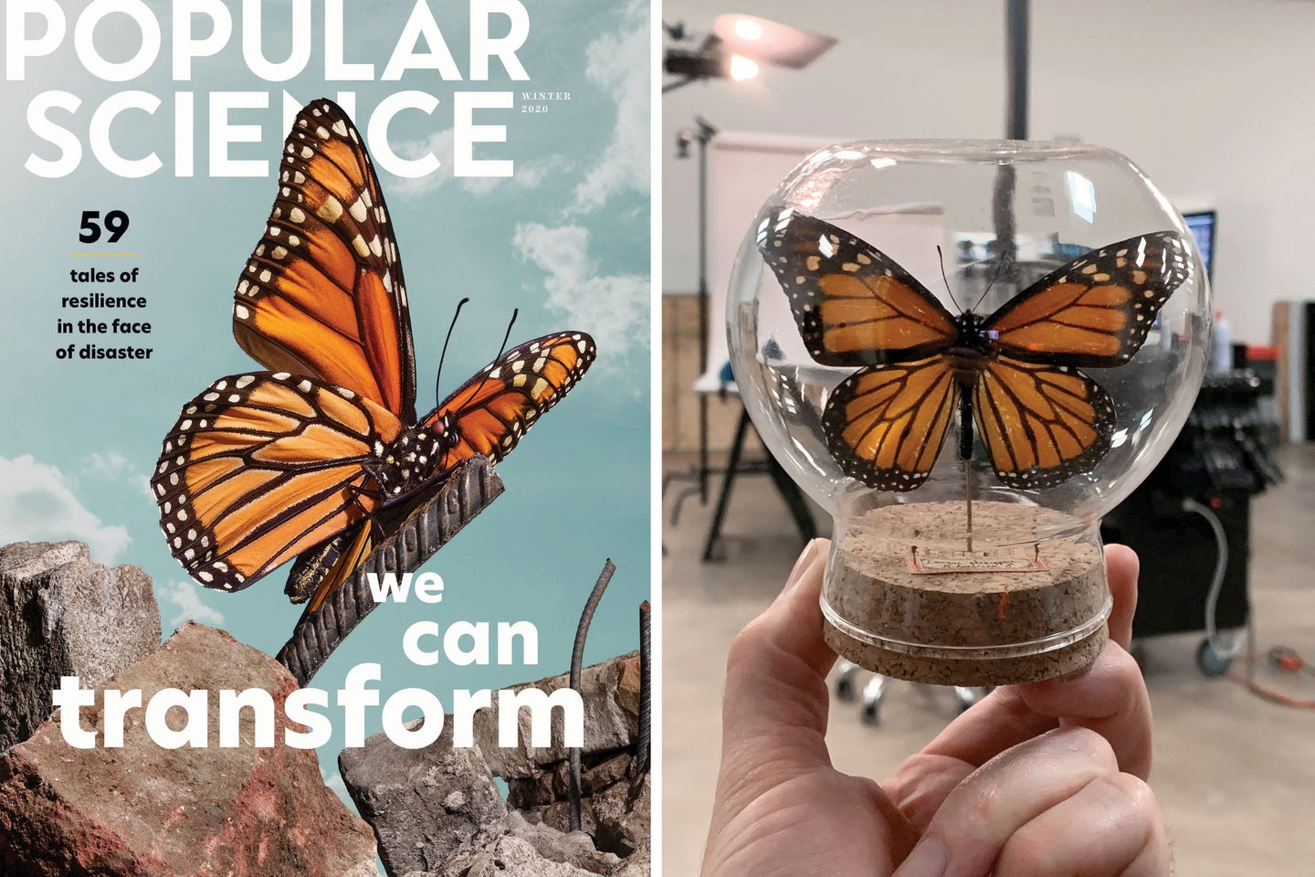 PopSci Transformation cover butterfly