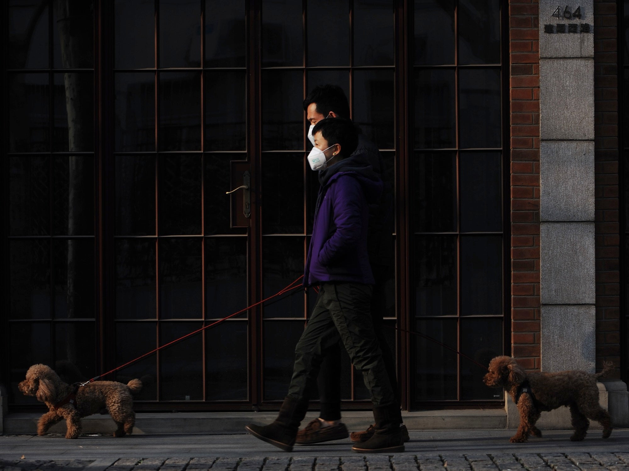 people wearing masks walking their dogs