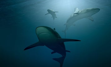 Sharks and rays are far less abundant in the world's oceans than 50 years ago