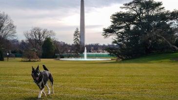 Major Biden stretches his legs on the White House lawn