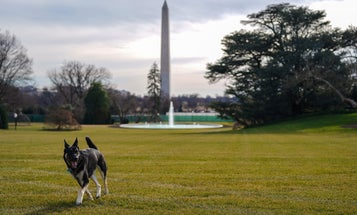 Dogs can make stressful workplaces better for people. Even the White House.