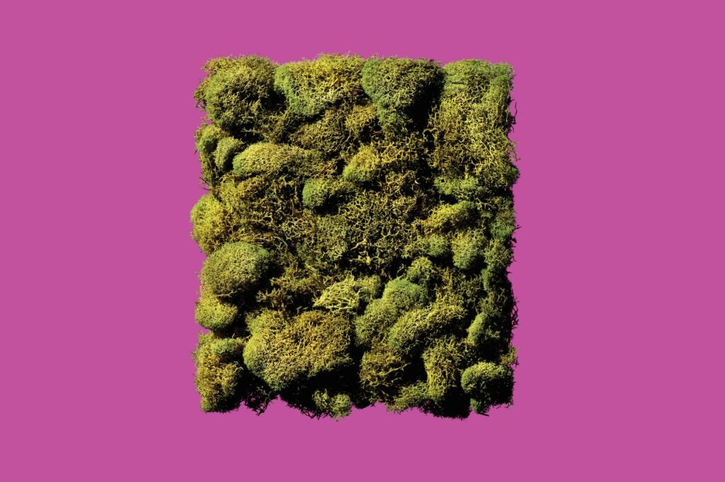 mossy plants on a magenta background