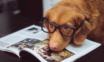 Is your dog actually smart? Depends on its memory.