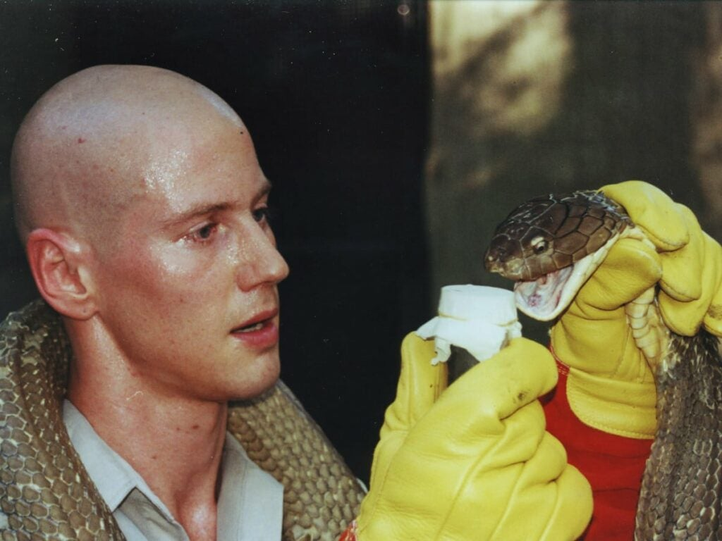Biologist Bryan Fry extracts venom from a king cobra
