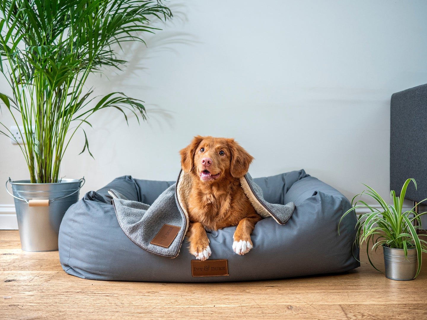 dog laying on a blue dog bed with a blanket