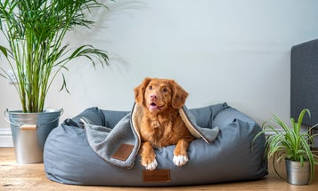 Best vacuum for pet hair: Get a fur-free home with these powerful dustbusters