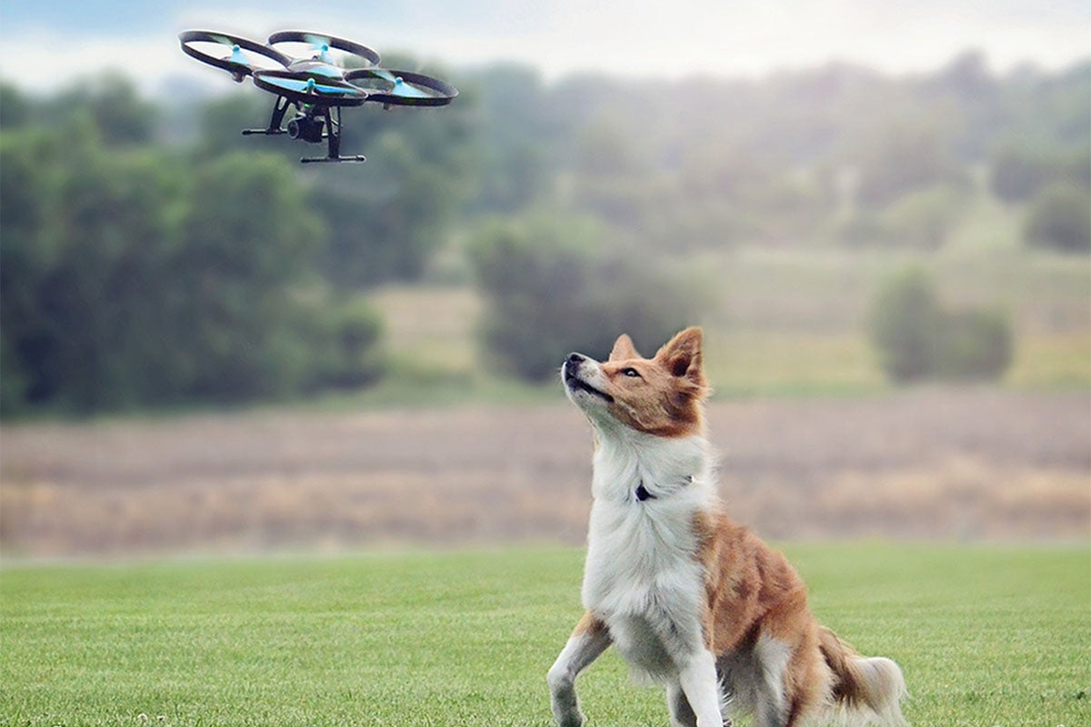 dog looking at a drone in the sky