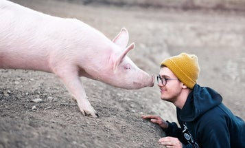 Pigs can play video games. Here's why that matters.