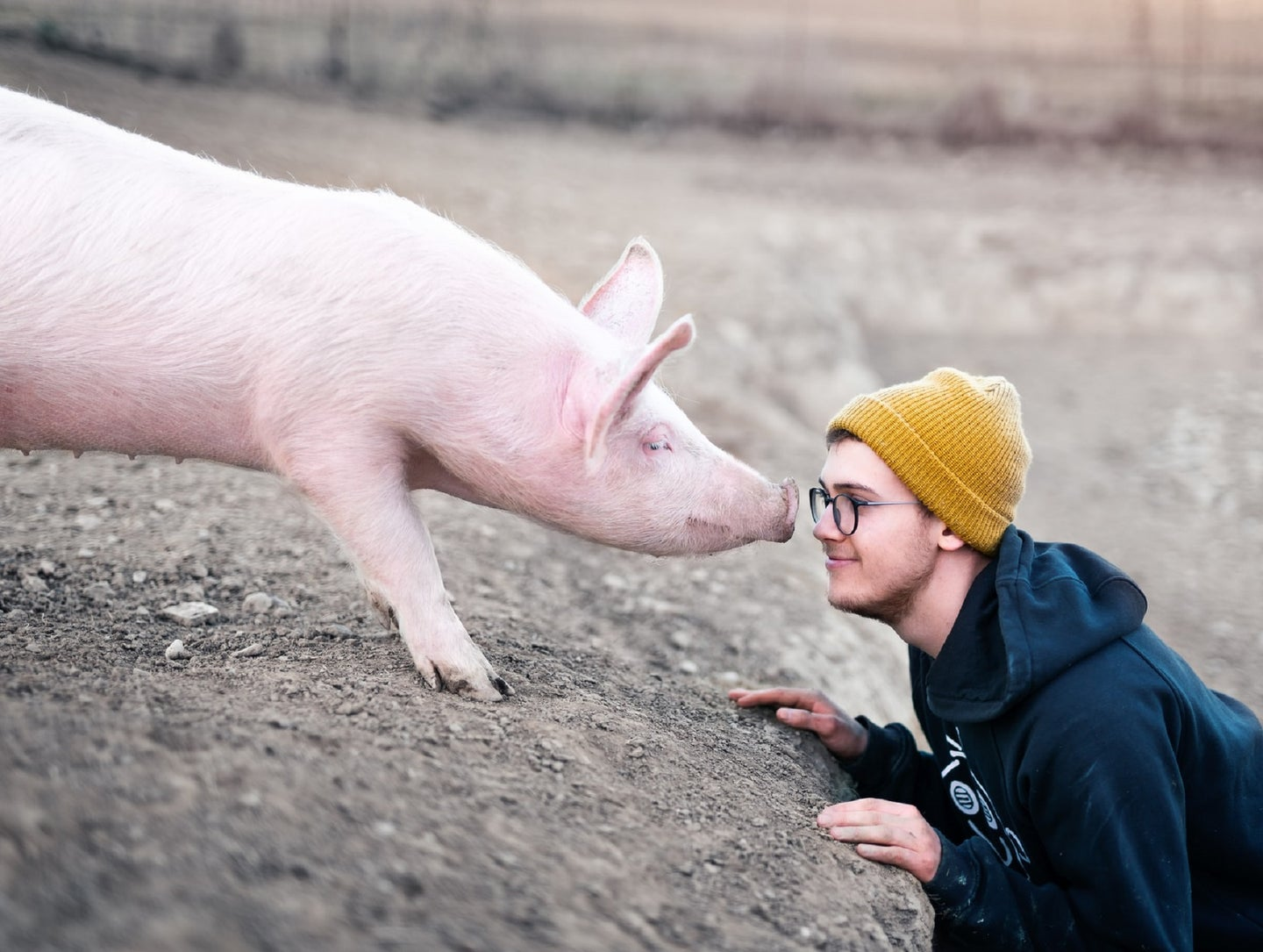 A pink pig nuzzling a person in glasses and a yellow beanie