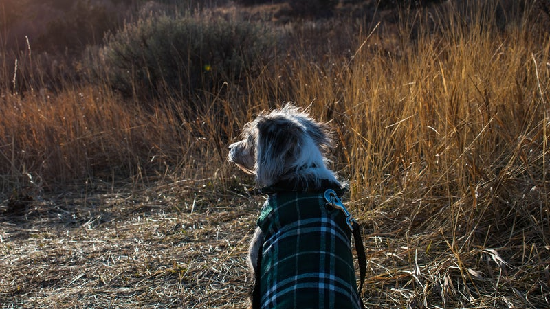 Best dog coats: Pet clothes to keep any dog warm