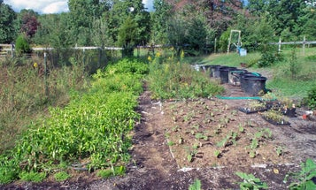 Start planning now for a healthy crop of homegrown food