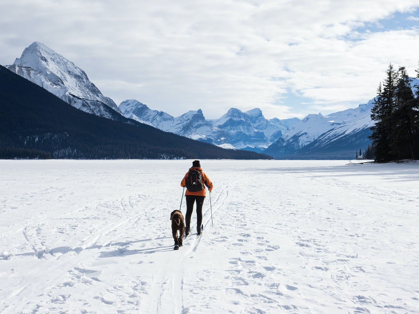 man on cross country skis with a dog going over a snowy flat part of a mountain