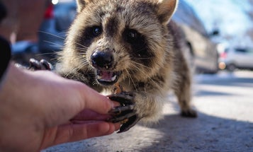 Americans spend millions of dollars on rabies treatments each year. They don't have to.