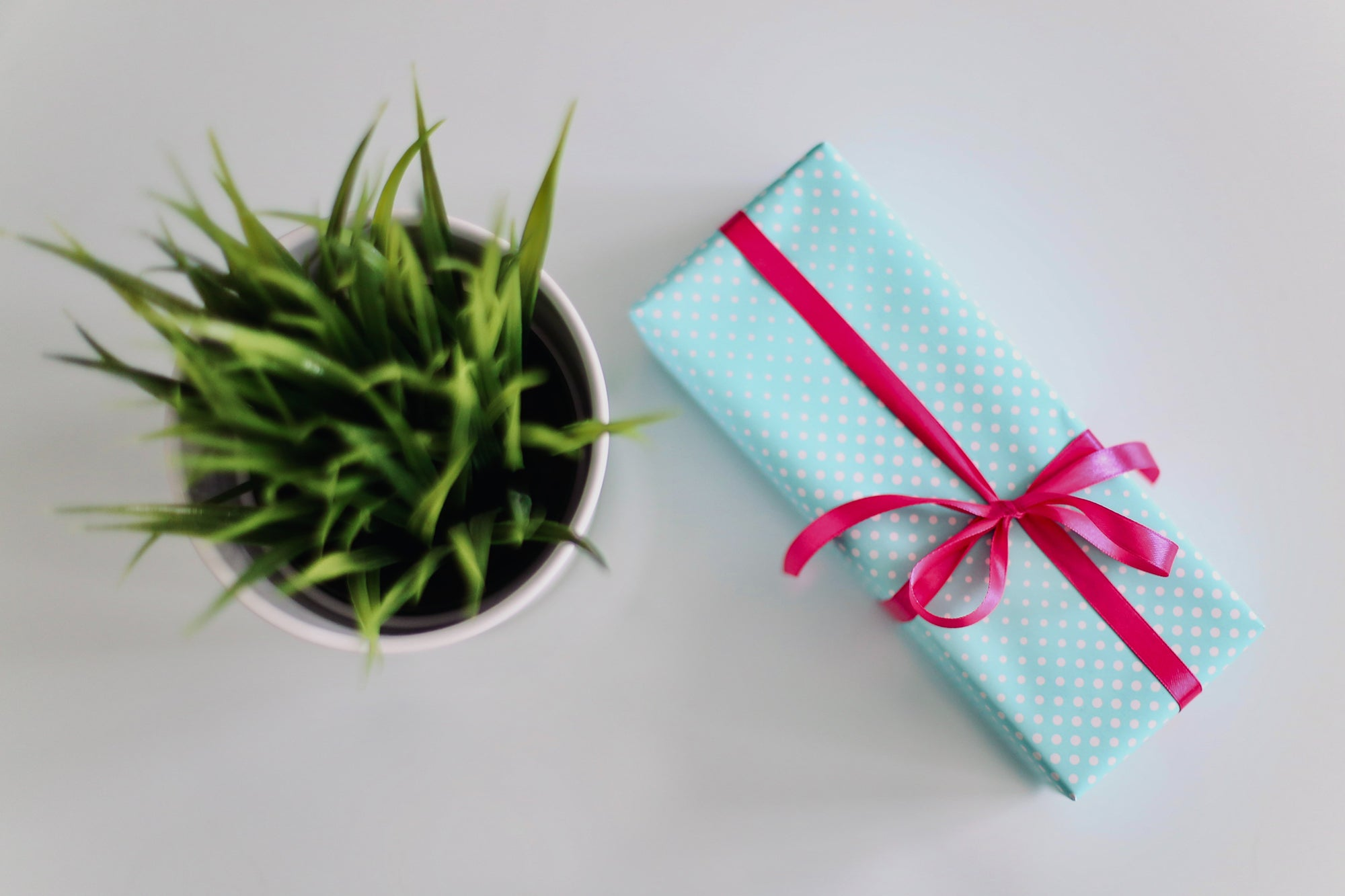 plant and a gift with blue wrapping paper and a pink ribbon