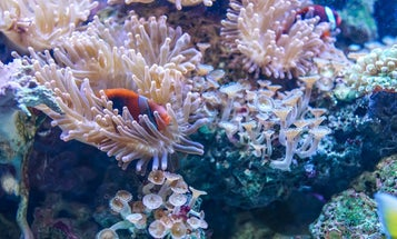 What underwater sounds can tell us about the state of coral reefs