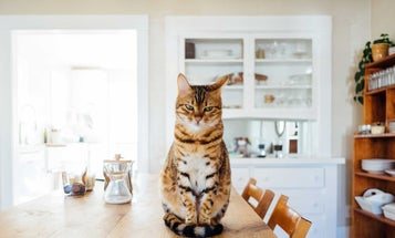 The best automatic cat feeders for your favorite feline