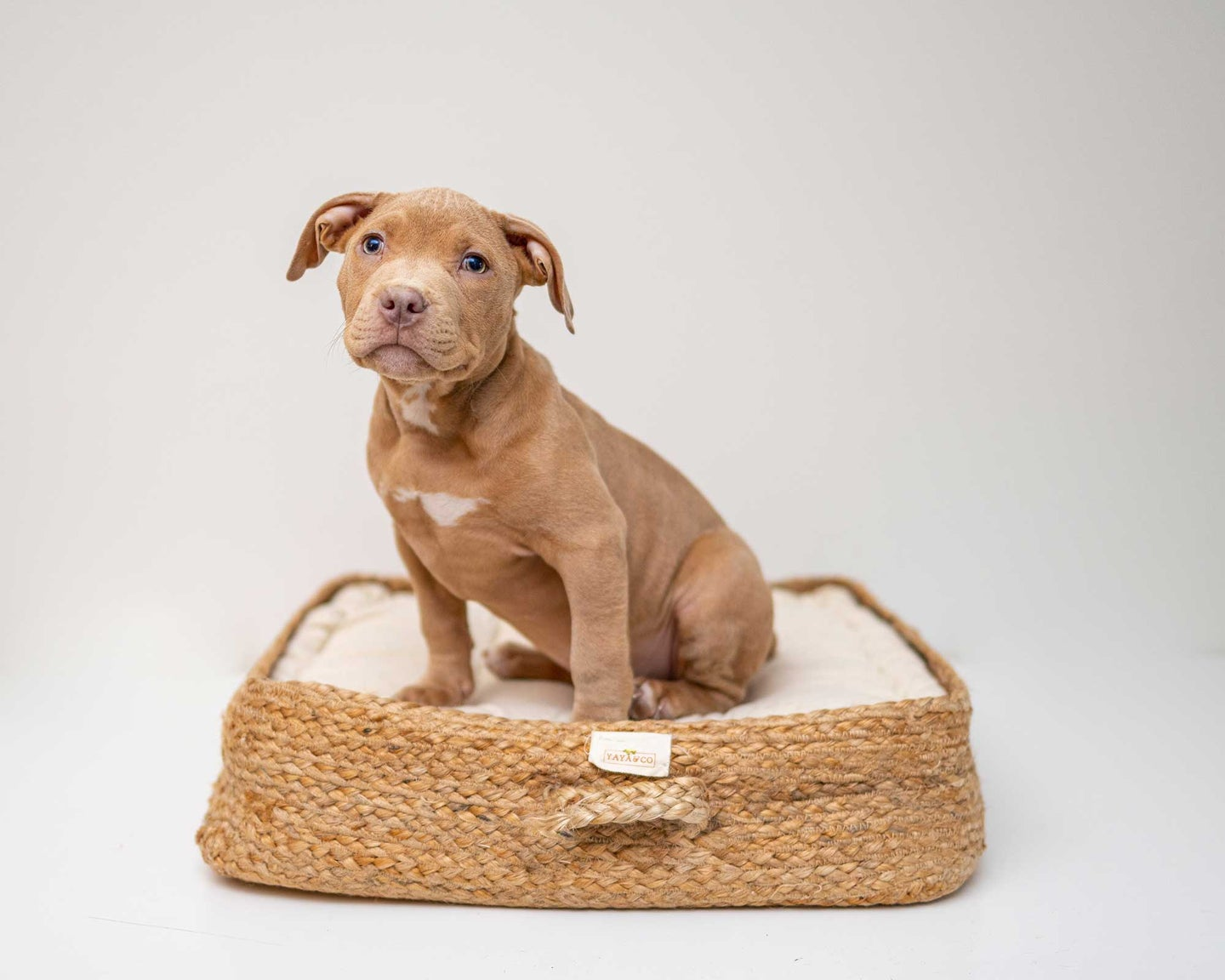 Adorable puppy in a dog bed