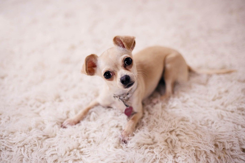 Cute dog on a rug