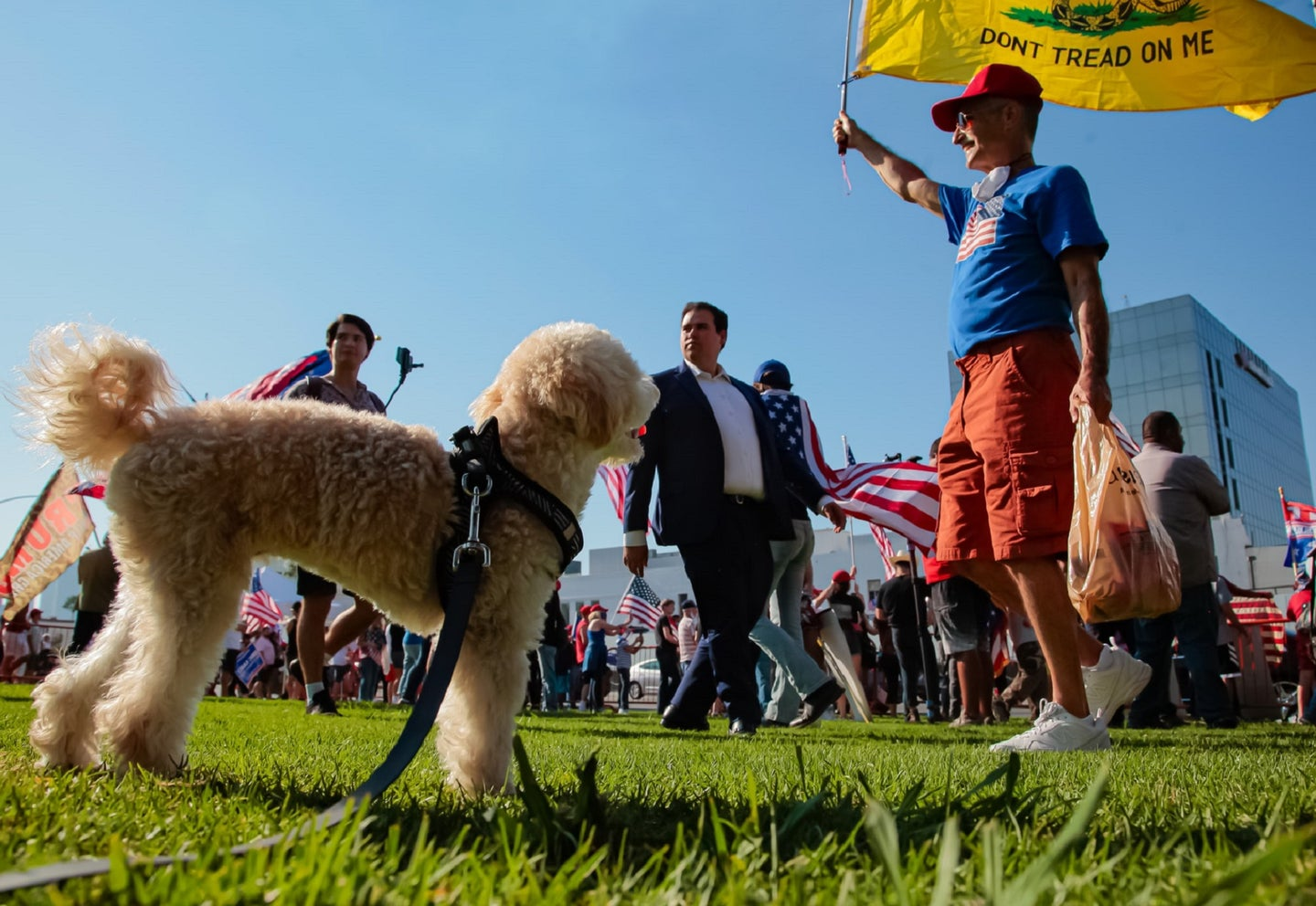 """Labradoodle dog looking at a person in a blue shirt with a yellow """"don't tread on me"""" flag"""