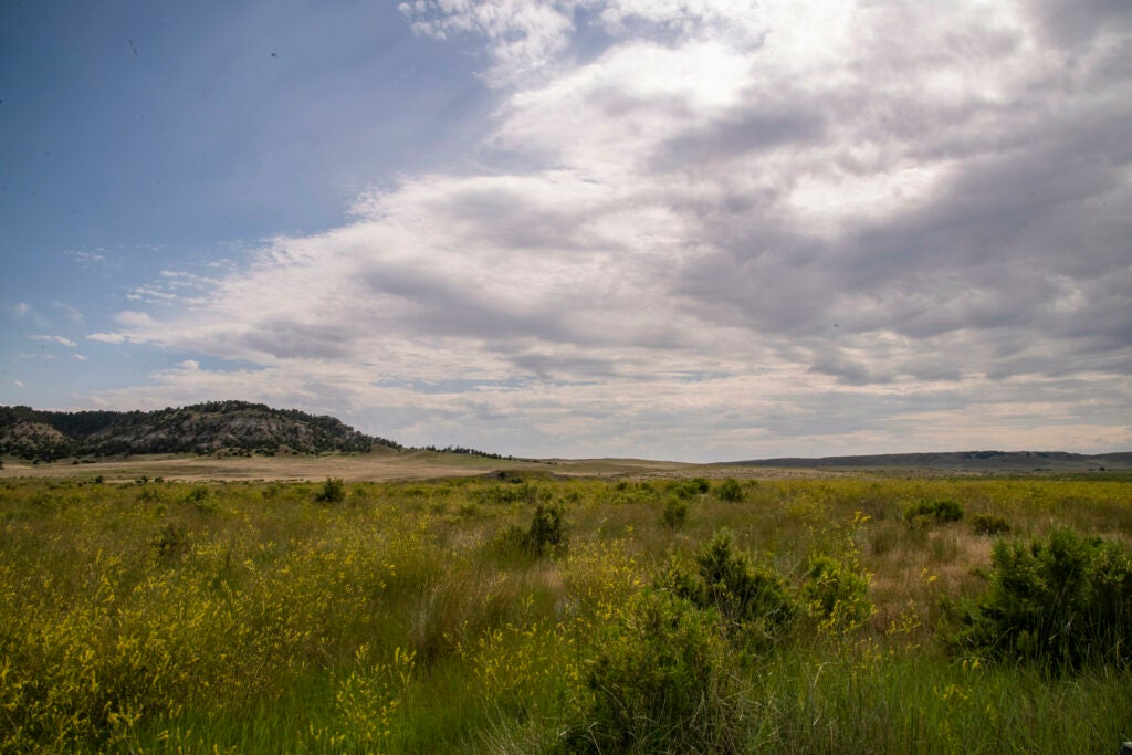 thunder basin national grassland