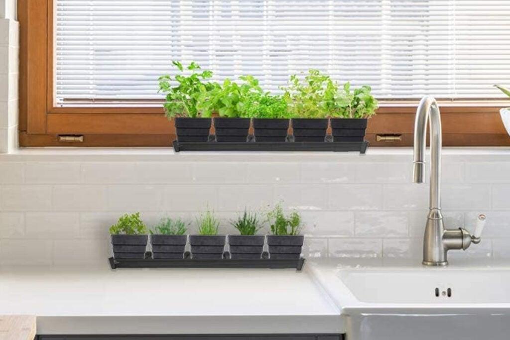 Windowsill Garden Herb Kit