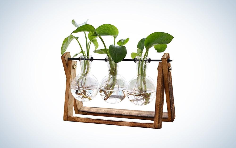 Terrarium Planter Tabletop Hydroponics Decoration