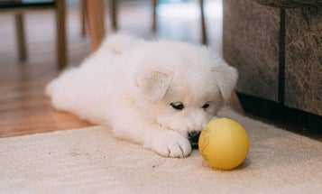 Dog puzzle toys to keep your pet entertained