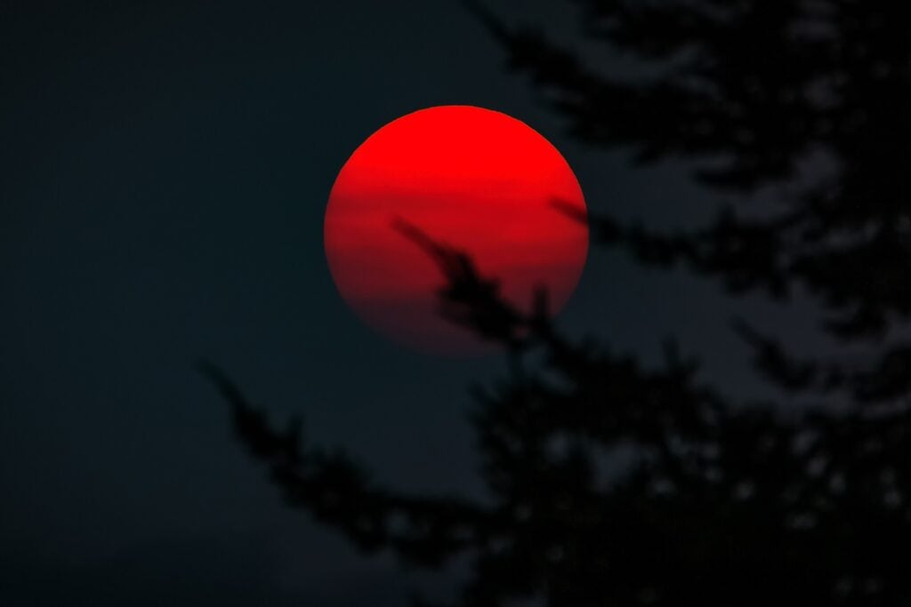 Crimson red sunset behind tree branches