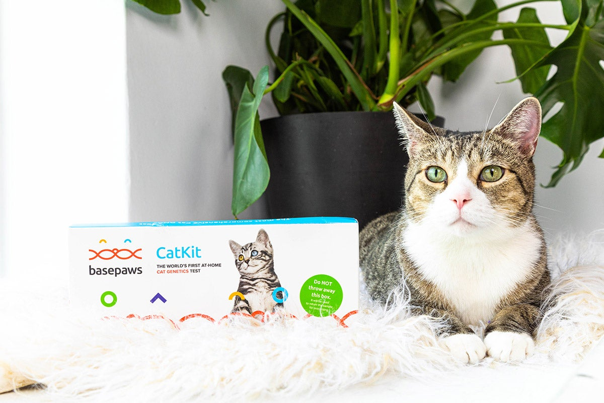 cat on a furry rug next to a basepaws dna kit