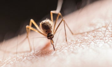 Catnip and grapefruit are ushering in a new era of insect repellants