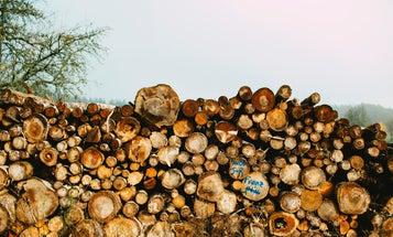 Burning wood pellets won't help us fight climate change