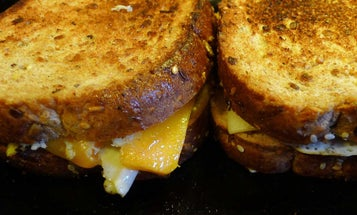 Toastie makers to level up your lunches