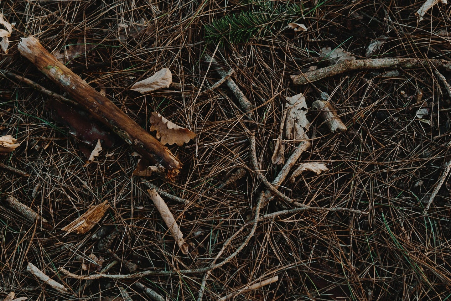 sticks and leaves on the ground