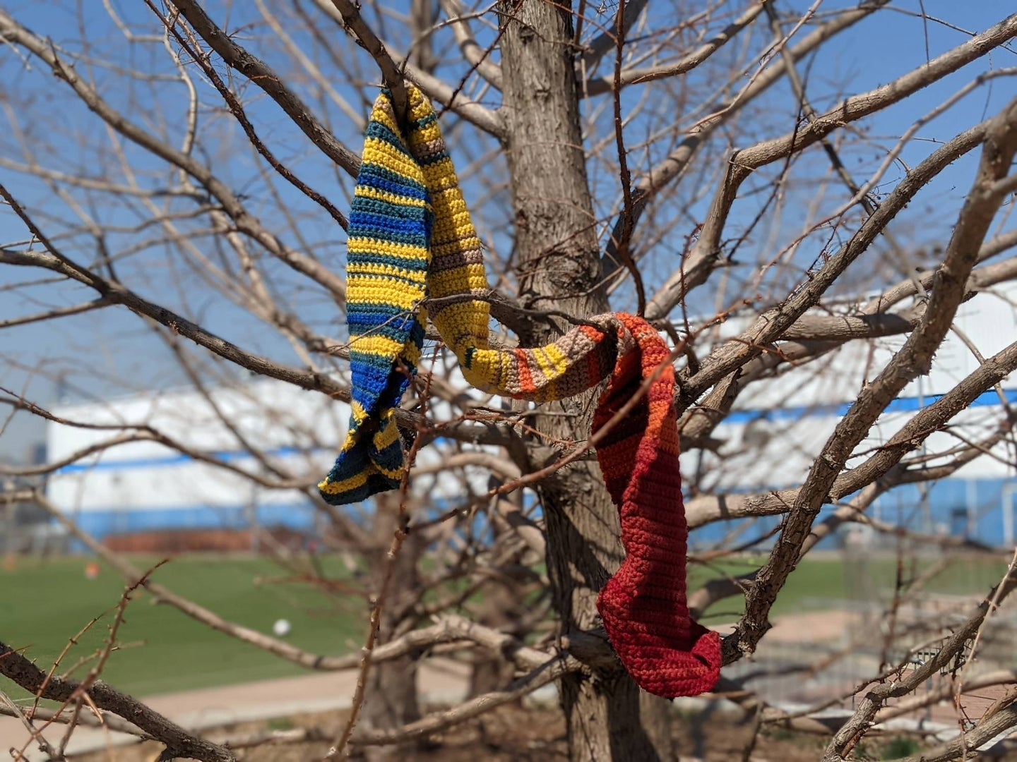 Temperature scarf hanging from a tree