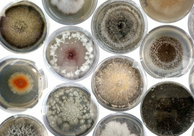 Fungi and seeds in petri dishes on a white background