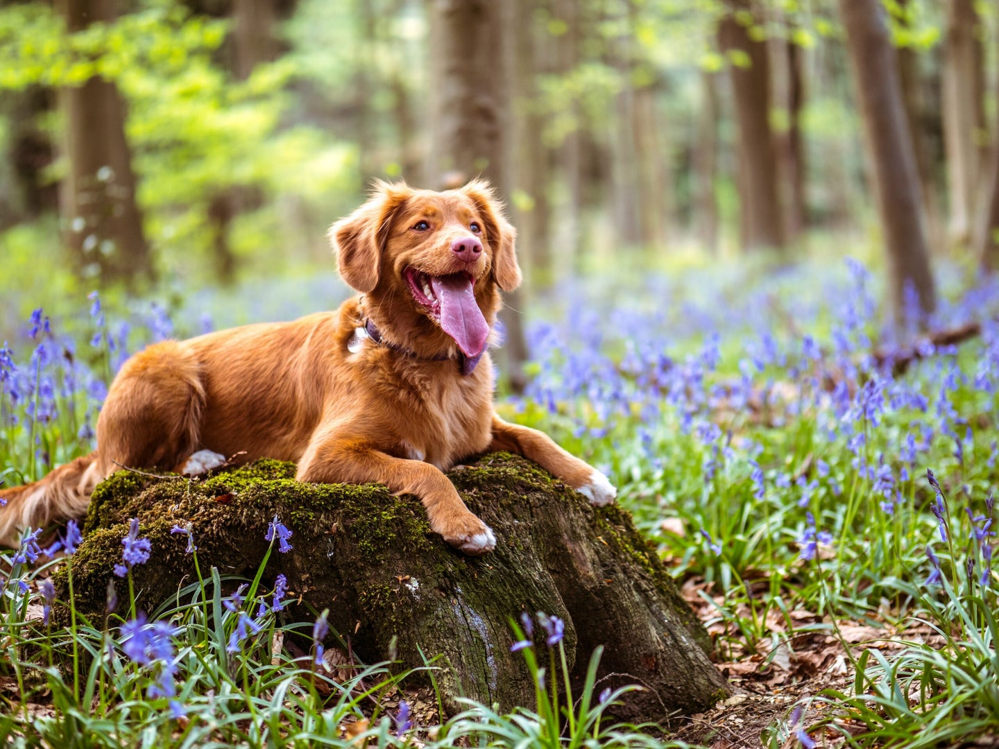 dog sitting on a log in a field of flowers