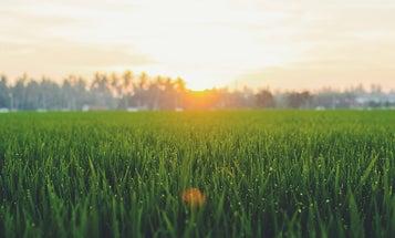 Best cordless lawn mower: Yard maintenance made easy