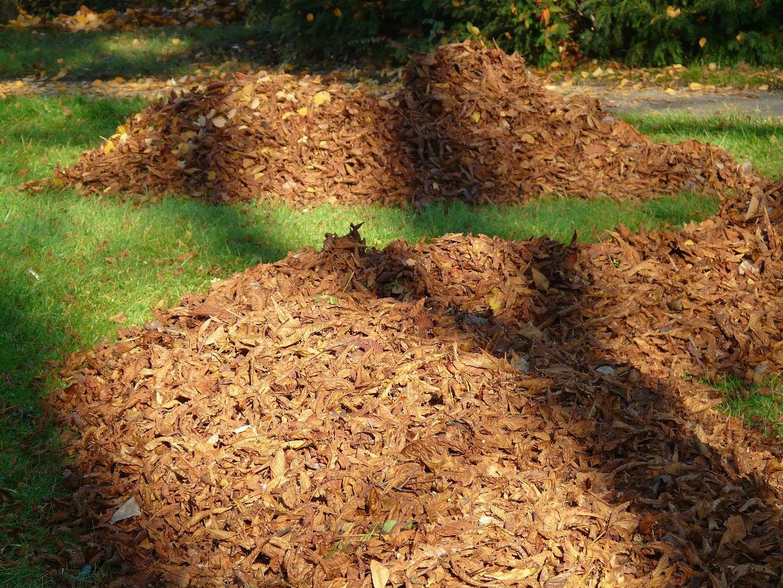 efficient yawn maintenance requires the best leaf vacuum