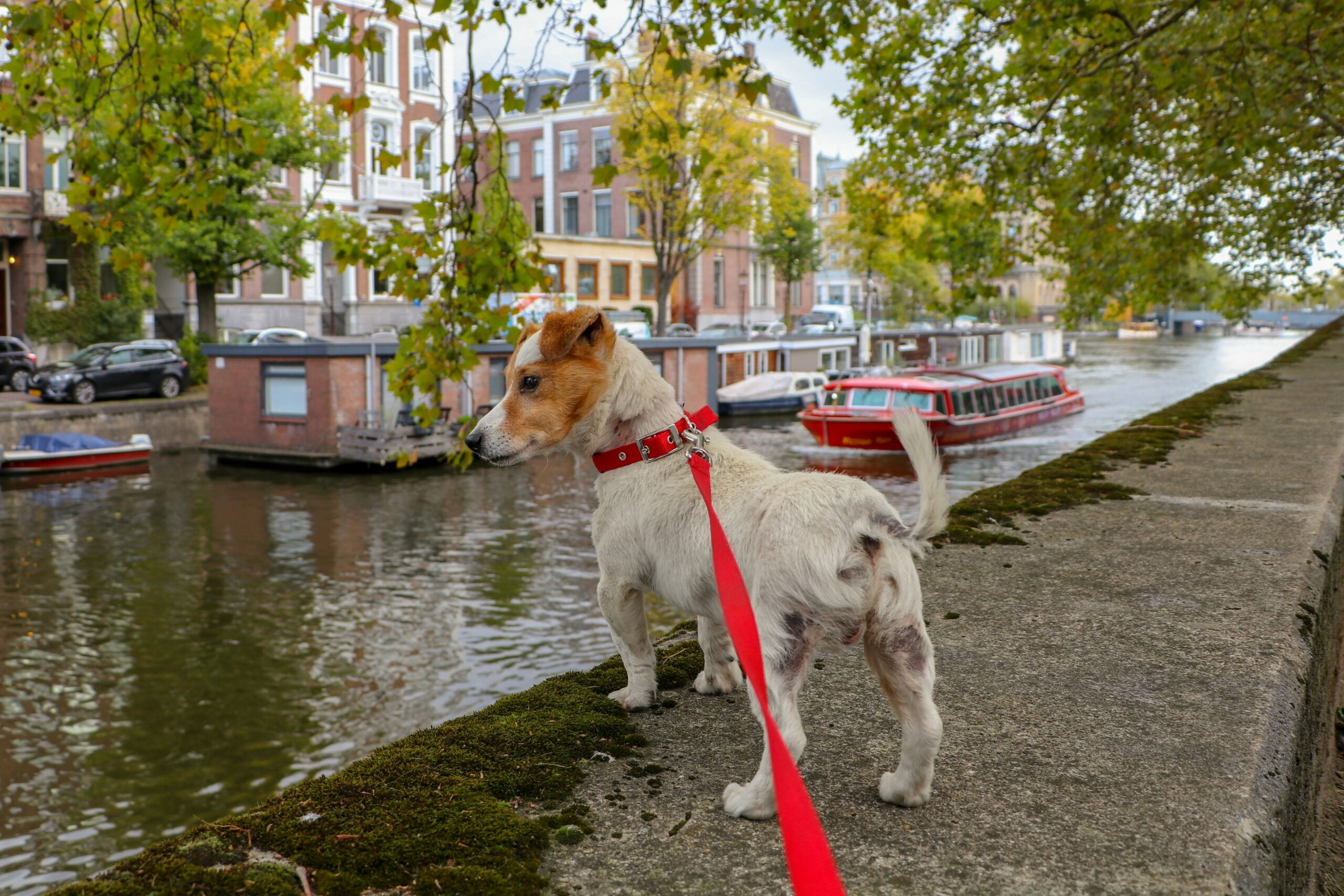 dog with a red lead on a riverbank