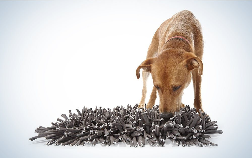 dog searching for treats in a gray rug