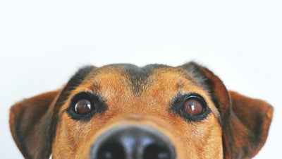 The best dog puzzles: Mental stimulation for your pup