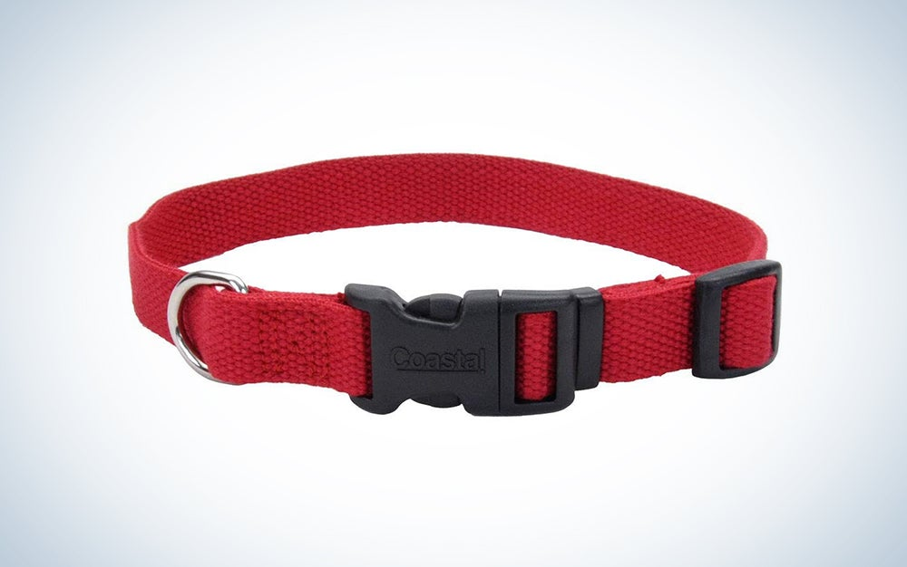 red budget dog collar