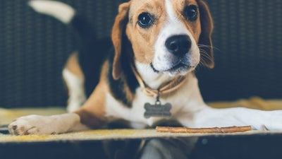 Best dog collars: Accessorize your favorite companion in style and comfort