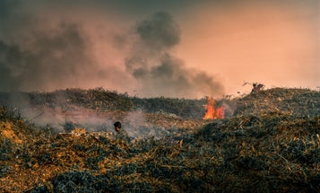 Forest fires leave behind charcoal—and it might be toxic for years